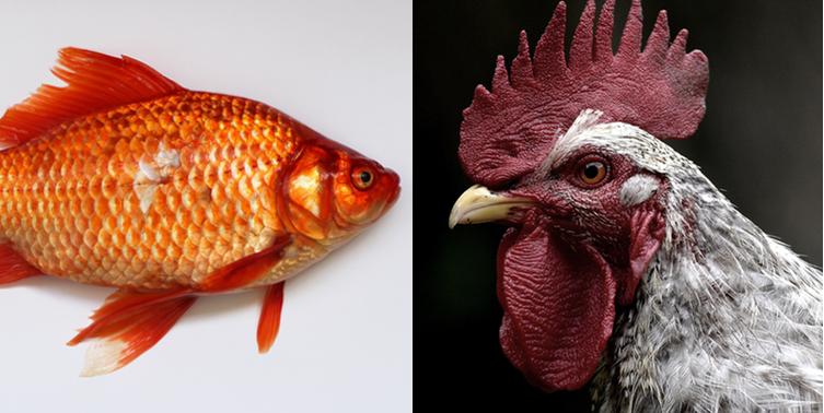 Neither Fish Nor Fowl - Liz Sumner | Life Coach